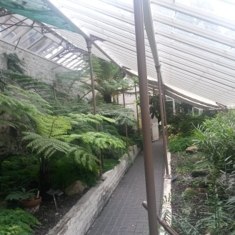"""Cool fernery"""