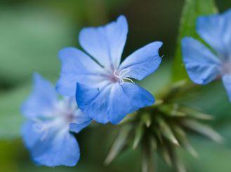 Blue_flower_(9886082944)