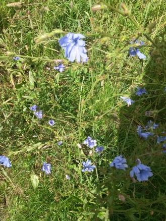 purple flowers in the heath