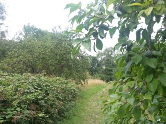 green community orchard