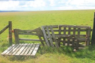 North York Moors in September
