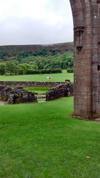 Horses in Llanthony